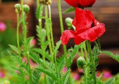 Bepflanzung (7)