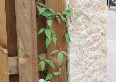 Mauern und Zäune (54)