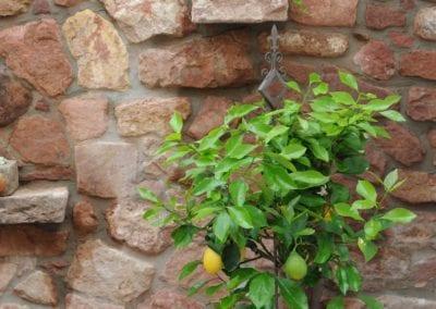 Mauern und Zäune (64)